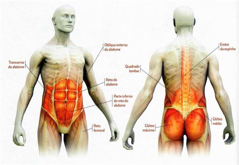Musculos do Core eLIS